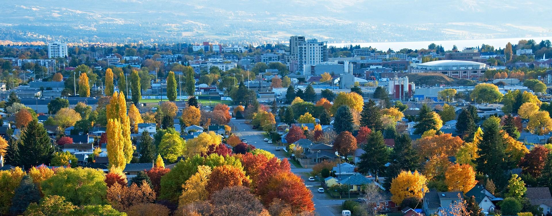 Colourful fall trees