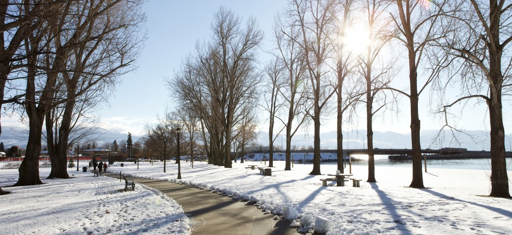 Trees in City Park in winter