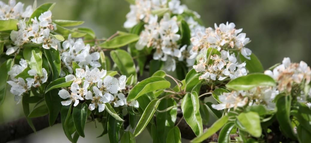 Pesticide free flowers