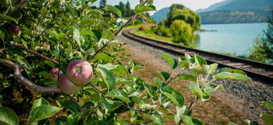 Oyama rail trail