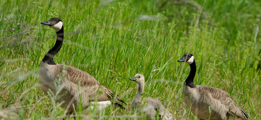 Munson Pond Park Birds
